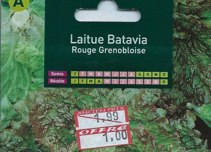 laitue-batavia-rouge-grenobloise