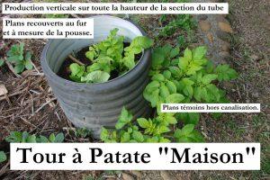 patate-dans-et-hors-canalisation-dzprod-jardin