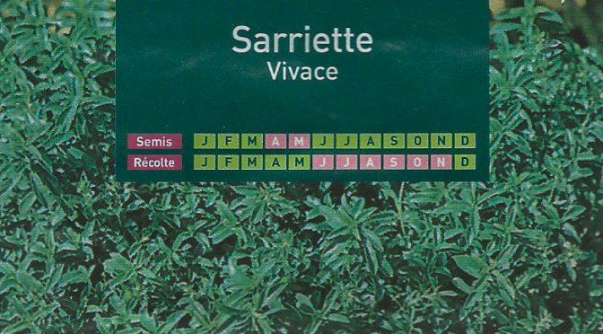 Sarriette Vivace