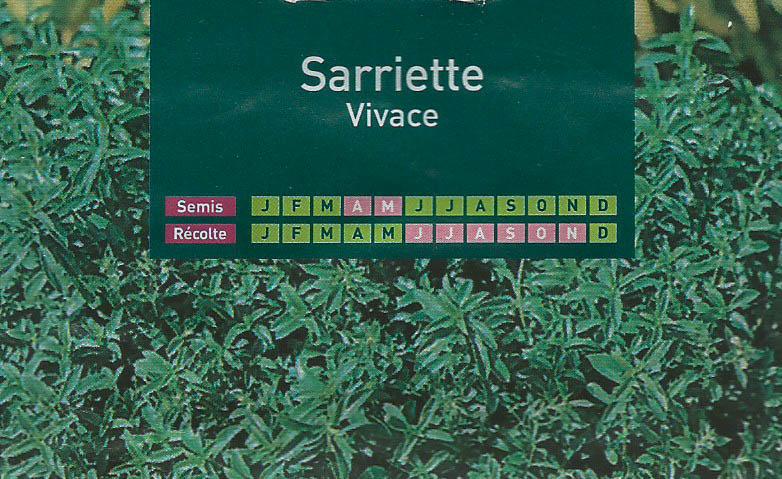 sarriette-vivace