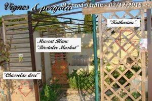vignes-et-pergola-dzprod-jardin-02-decembre-2016