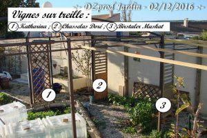 vignes-sur-treille-dzprod-jardin-02-decembre-2016