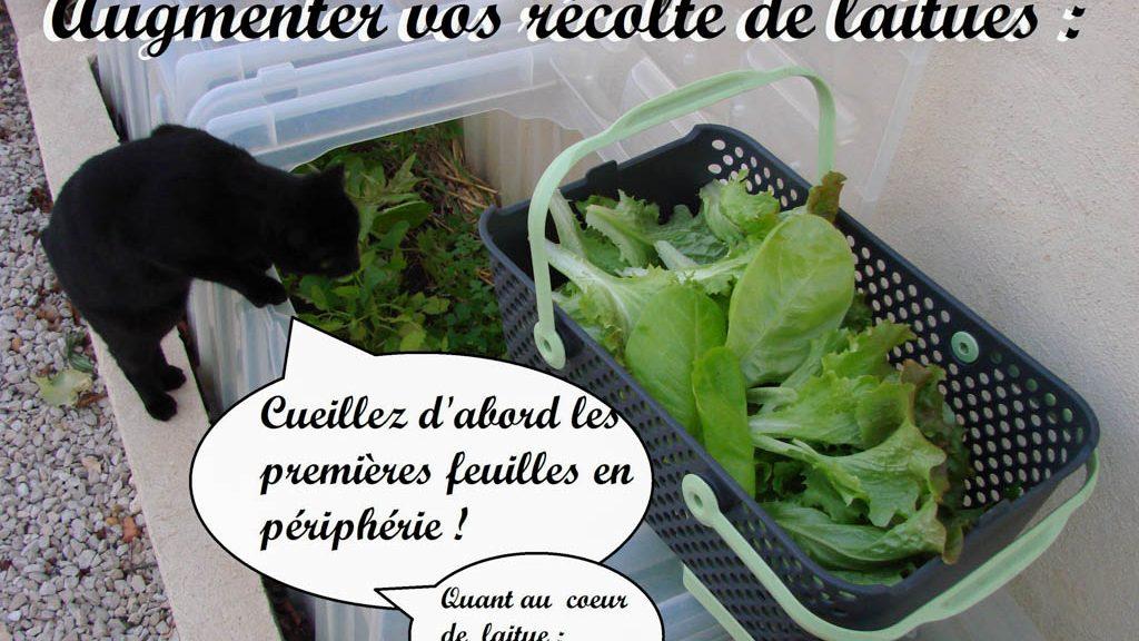 Augmentez vos récolte de laitues - DZprod Jardin - 23-12-2016