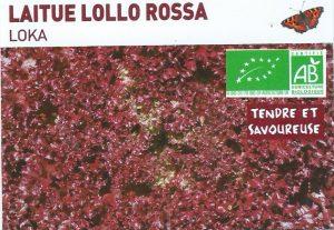 Laitue Lollo Rossa - Loka