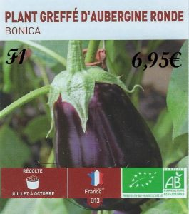 Plant greffé aubergine ronde F1 - botanic® - dzprod jardin