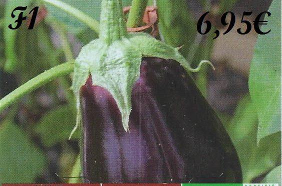 Rentabilité d'un plant d'aubergine greffée à 6.95€ à botanic®