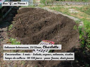 Pomme de terre Charlotte - Jardin DZprod du Loucascarelet - 26 mai 2017