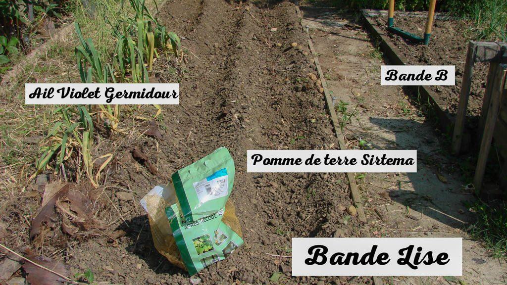 Pomme de terre Sitema - Jardin DZprod du Loucascarelet - 26 mai 2017