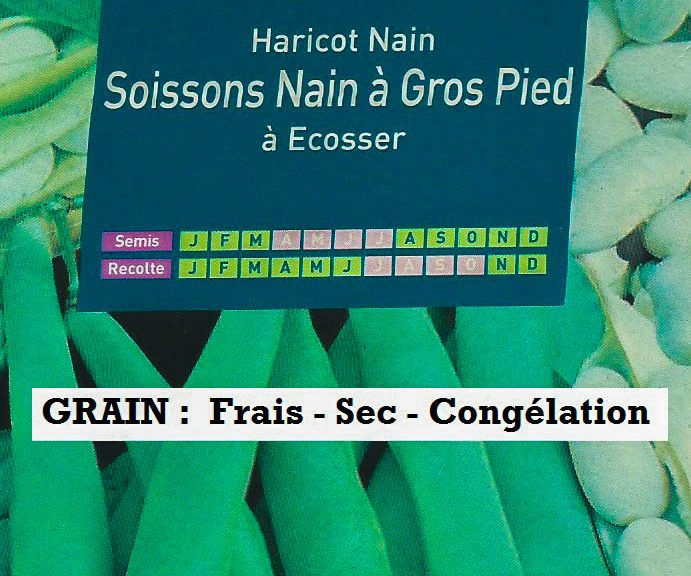 Haricot Nain Soissons Nain à Gros Pied à Écosser
