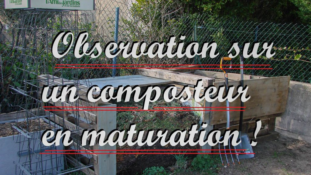 Observation sur un composteur en maturation - youtube mignature