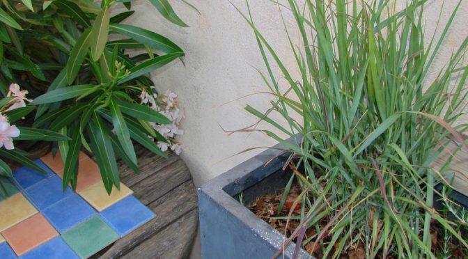 Globe Planter – Première introduction de Graminées