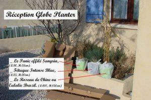 Réception Globe Planter - panic effile - fétuque - roseau de chine - 23-02-2017