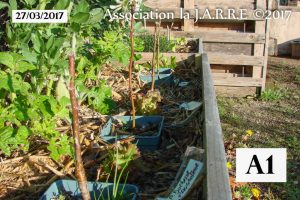 Bac A1 - jardin de Quartier - 27 mars 2017