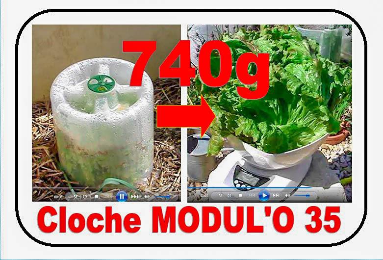 Cloche MODULO record - batavia gloire du Dauphiné de 740g - 08-04-2017