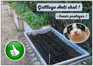 grillage anti chat pour la protection des semis