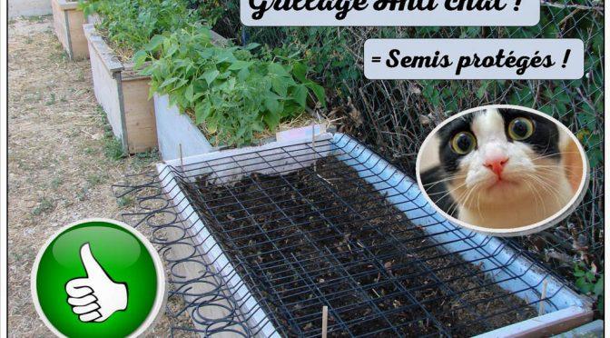 Culture en bacs : Du grillage pour la protection des semis !
