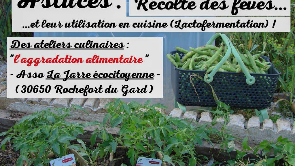 Récolte et lactofermentation des fèves - Association la jarre écocitoyenne -02-05-2017