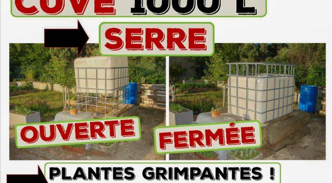 Recyclage tonne à eau (cuve de 1000 litres) en serre pour plantes grimpantes