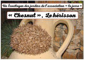 Chesnut le hérisson - auxiliaire du jardin