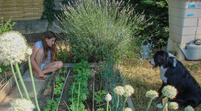 Prendre le temps de l'observation au jardin naturel