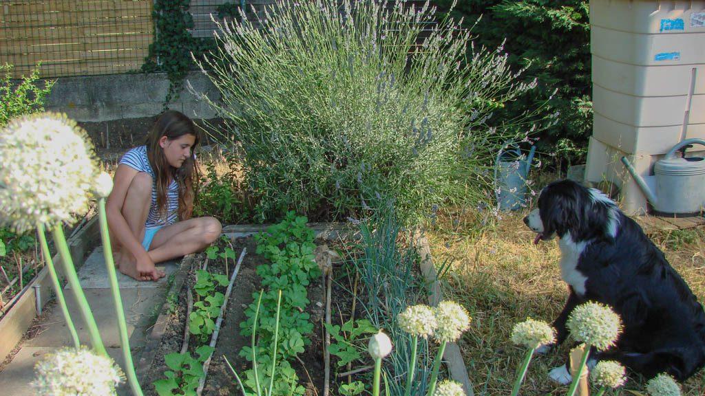 Les légumes poussent à vue d'oeil - Loucastarelet - 15 juin 2017