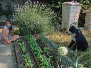 On révasse au jardin en regardant les légumes pousser - Loucastarelet - 15 juin 2017