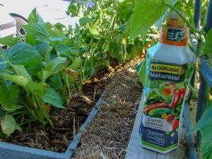 Algoflash Naturasol - Engrais universel liquide - dzprod Jardin