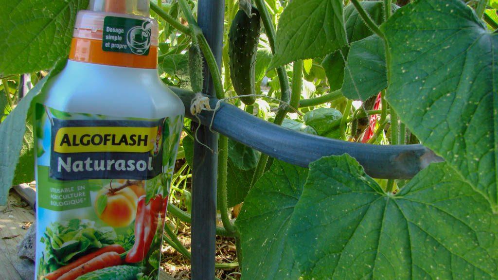 Algoflash Naturasol - Engrais universel liquide pour le potager - dzprod Jardin