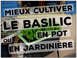 Comment mieux cultiver le basilic en pot en terrine ou en jardinière - DZprod Jardin