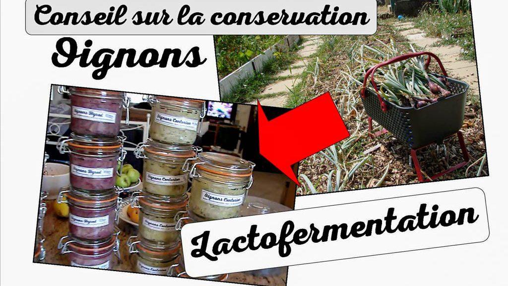 conserver vos oignons en lactofermentation - DZprod Jardin