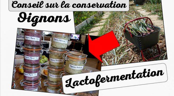 Conseil Conservation Récolte Oignon : Lactofermentation !