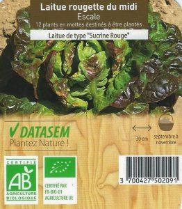 12 plants de laitues rougette du midi - sucrine rouge - barquette cagette BOTANIC - AB - 3€60 les 12 plants