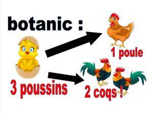 3 poussins 1 poule 2 coqs - botanic®