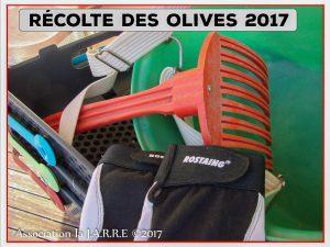 Lancement de la récolte des olives - association la jarre - Rochefort du Gard