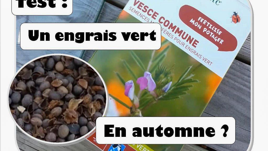 VESCE - test comme engrais vert automnale - DZprod Jardin - 12-10-2017