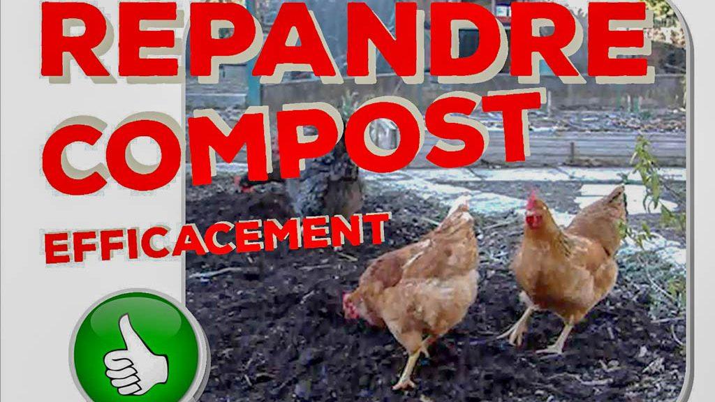 Les poules aident au jardin naturel - DZprod Jardin - 28-12-2017