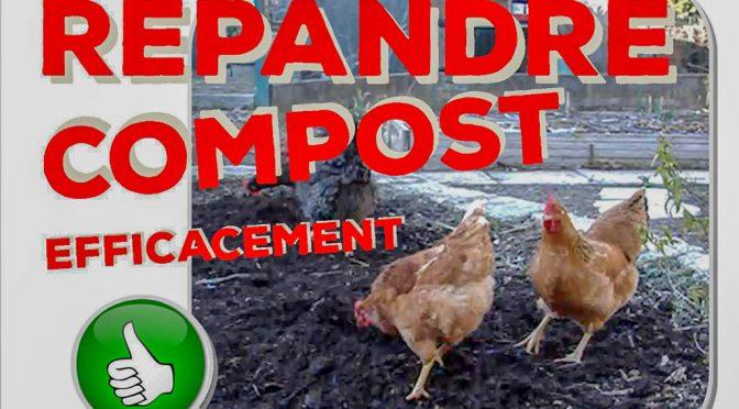 Des poules pour répandre son compost efficacement !