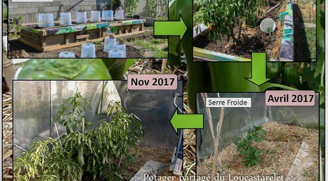 Un plant de poivron peut vivre plusieurs années !