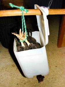 Cône abattage sacrifice - saignoir -fabrication maison - gratuit - DZprod jardin