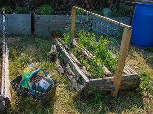 Bac bas 1en dosse - pois Dakota - jardin urbain du pébrier - 16-05-2018