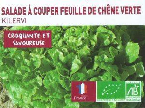 Salade à couper feuille de chêne verte - 3e70 les 12 plants - botanic®