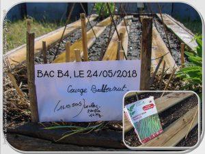 Semis Haricot et butternut B4 - jardin urbain du pebrier - 24-05-2018