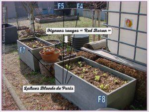 Transplantation laitue blonde de Paris bac f4 -5-7-8 - jardin urbain allée du pébrier - rochefort du gard - 02-02-2018