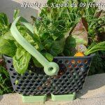 le petit Kajo pour la récolte du jour - 09-02-2018