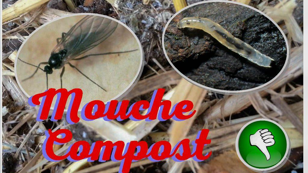 mouche du terreau - mouche du compost - sciaride - DZprod Jardin