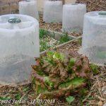 cloche modulo 35 - pouss vert - mv industrie - special salade - dzprod jardin