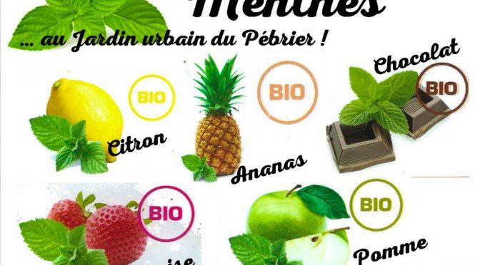 Différentes variétés de Menthes pour le jardin urbain du Pébrier