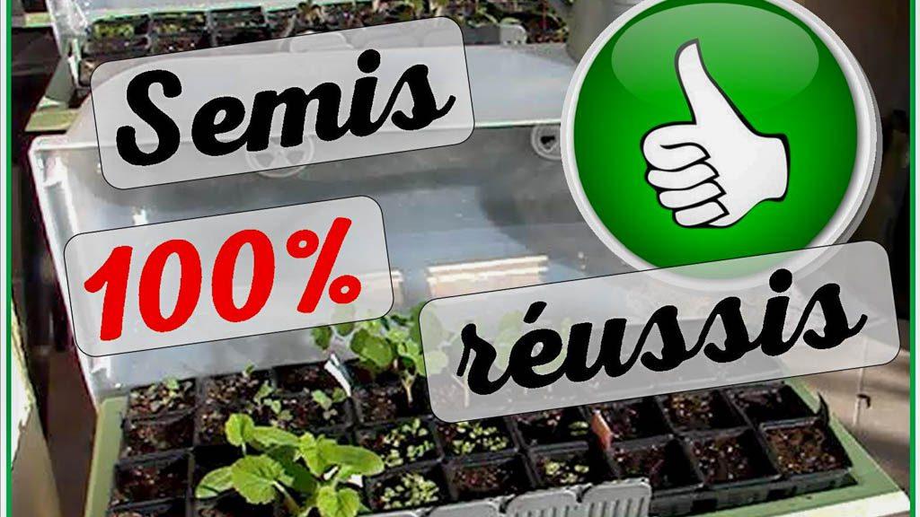 semis 100 reussis - jardiniere calipso - 04-2018
