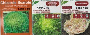 Chicorée scarole - 3 variétés - dzprod Jardin 2018