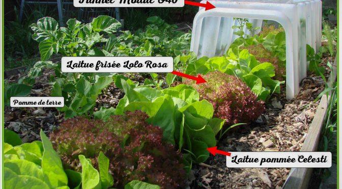 Astuce culture de salade sous tunnel Modul'O 40